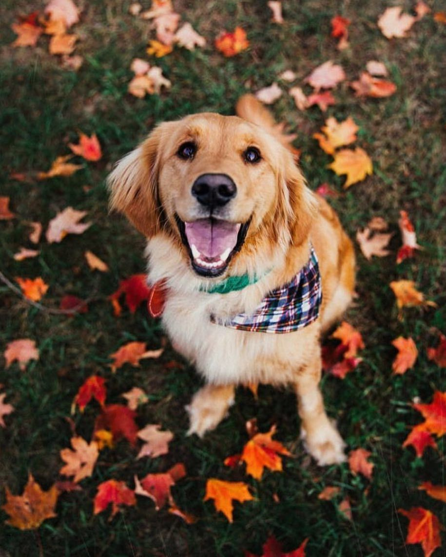 Halloween On Instagram 22 Days Left Photo By Kjp Fall Dog Fall Dog Photos Dog Photoshoot