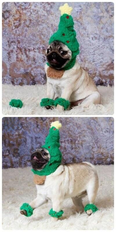 Pugs, pugs everywhere!! Oh wow this pug is styling that christmas tree  outfit, Like a BOSS ;) - Pugs, Pugs Everywhere!! Oh Wow This Pug Is Styling That Christmas