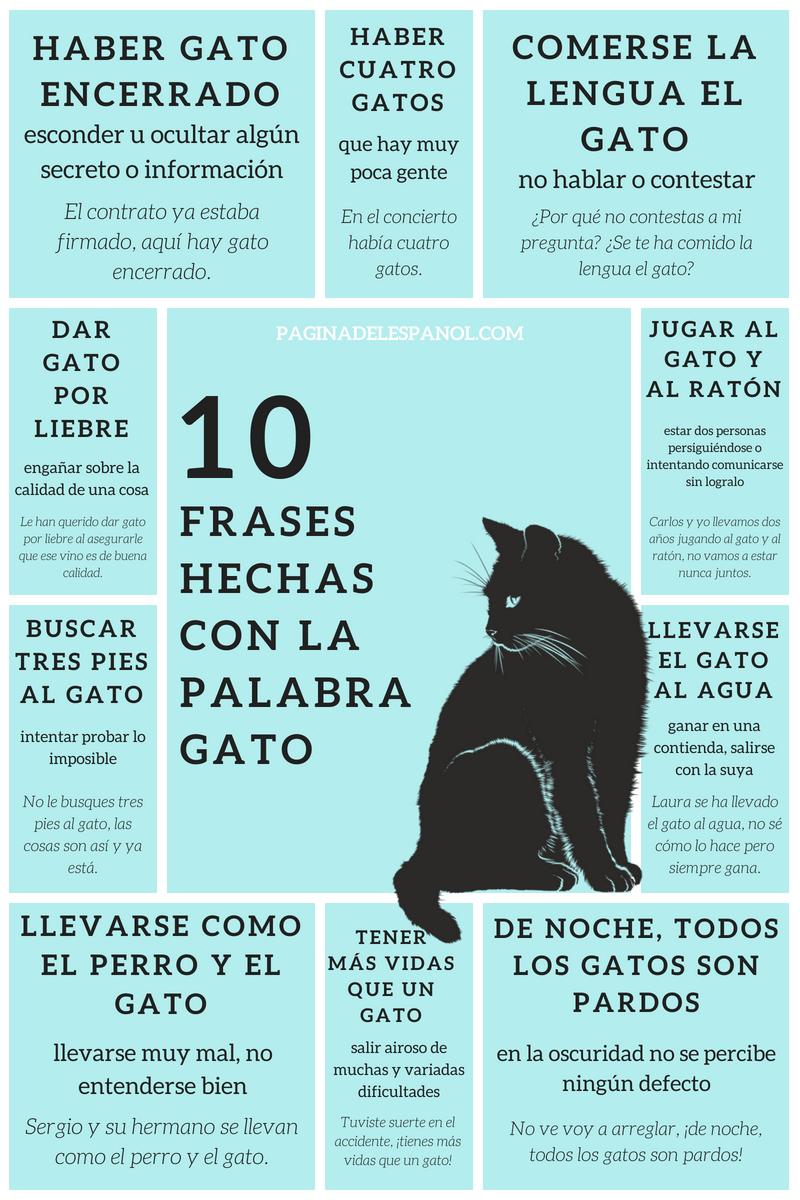 10 Frases Hechas Con La Palabra Gato Español Expresiones