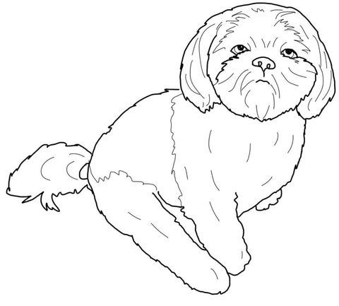 Shih Tzu Coloring Page Free Printable Coloring Pages Puppy