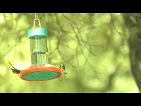 high-speed hummingbird shuttle display.avi