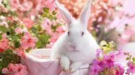 A single rabbit can give birth up to 8 times in one year!