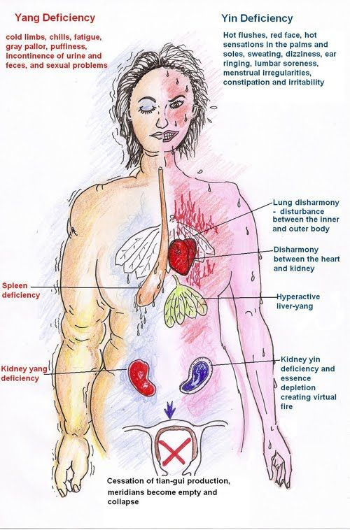 Surgical Menopause Body Diagram Manual Guide