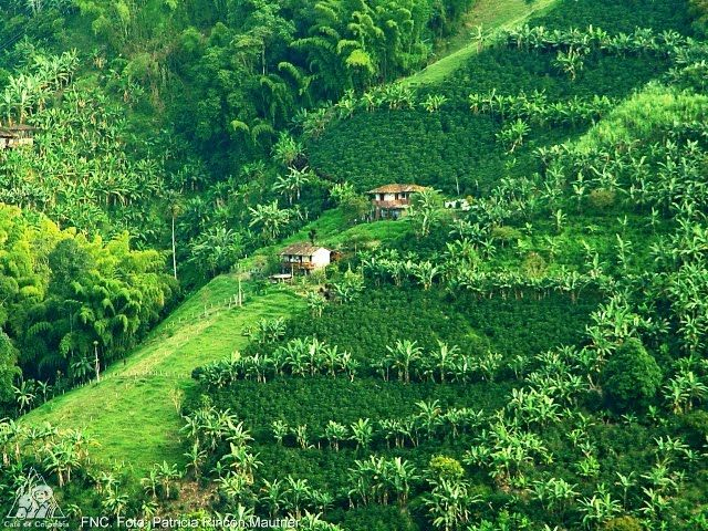 The Coffee Cultural Landscape Of Colombia Paisaje Cultural Paisajes Paisajes Naturales De Colombia