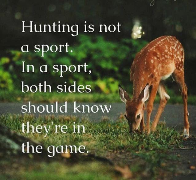 anti #hunting #antihunting   Animal advocacy, Vegan animals, Hunting