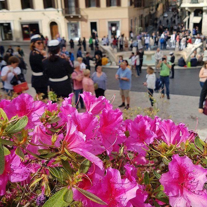 Essa é a vista das escadarias de Trinità dei Monti para a fonte de Bernini e para a Via Condotti a rua das marcas de roupas mais famosas - e caras!  . As flores estão ali somente na primavera! Corram  . Lembre-se que nós fazemos o seu roteiro personalizado em Roma organizamos o seu transfer do/para o aeroporto e também sua hospedagem! info@emroma.com .  Veja mais no Snapchat Em_Roma  #Roma #europe #instatravel #eurotrip #italia #italy #rome #trip #travelling #snapchat #emroma#viagem #dicas…