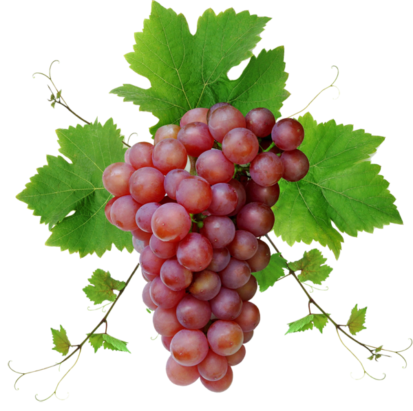 Pin By Kushalagarwal On Fruits Vegetable Grapes Fruit Red Grapes