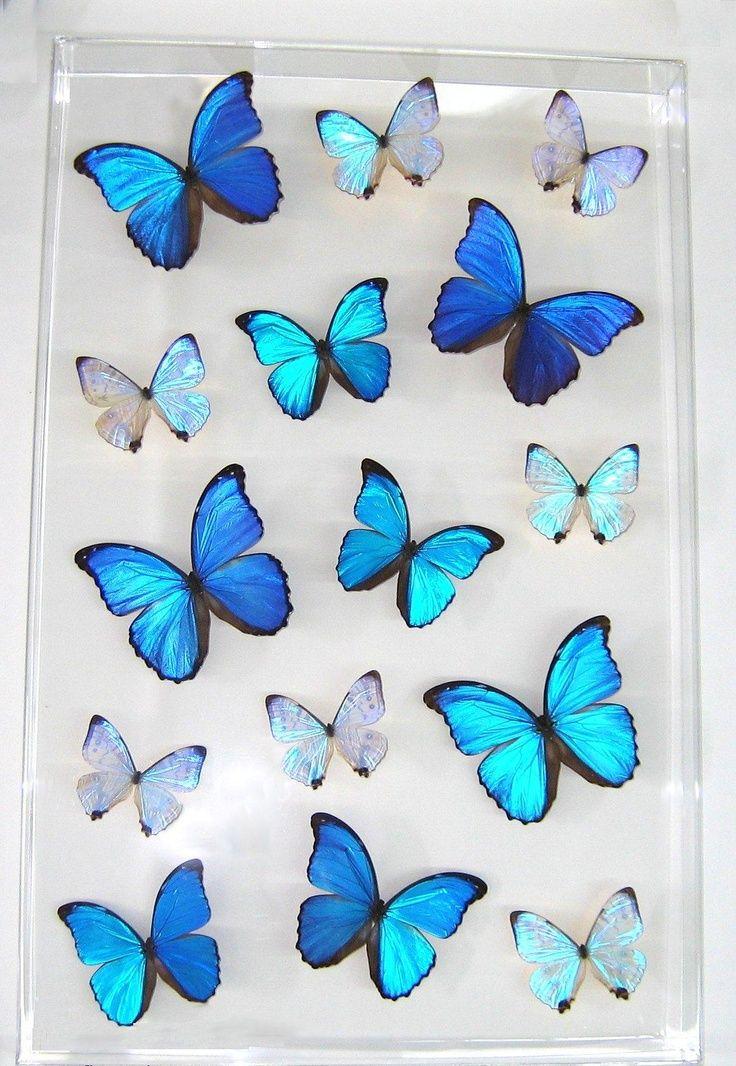 butterfly tattoo Tumblr Butterflies Pinterest Blue