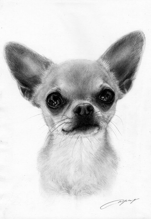 Chihuahua Painting - petdrawings | chihuahua | Pinterest | Ideas de ...