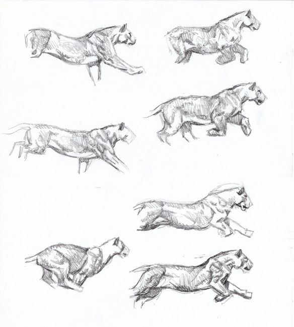 Sabertooth Diaries 3: big cat action sketches | Pinterest | Anatomy ...