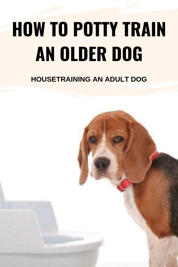 How To Potty Train An Older Dog Housetraining An Adult Dog Dog