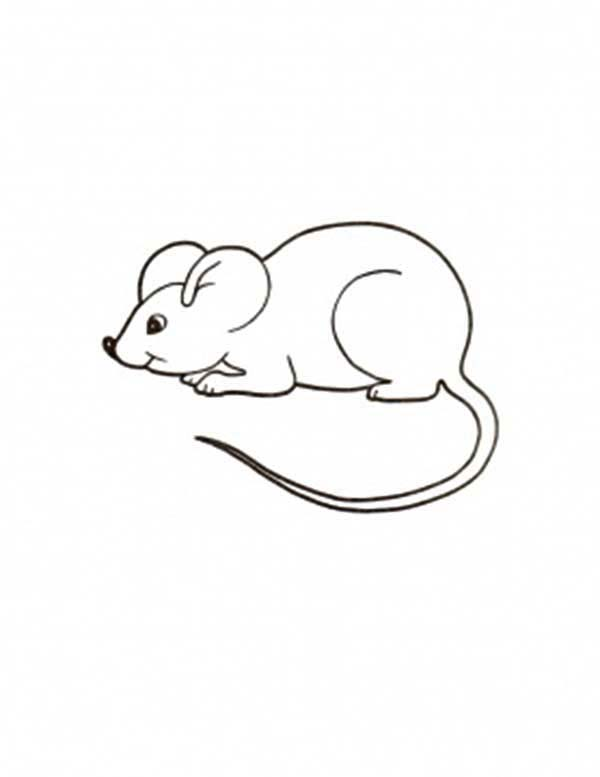 Mouse And Rat Coloring Pages For Kids Bulk Color Coloring Pages For Kids Animal Coloring Books Animal Coloring Pages