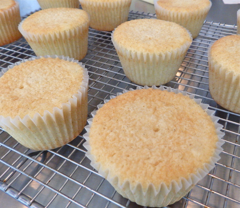 Vanilla Cupcakes Recipe Vanilla Cupcakes Cake Vanilla Muffins