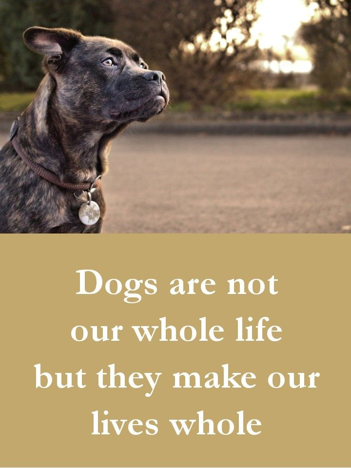 Quotes About Dogs 27 Beautiful Dog Quotes  Some Touching Some Poignant & Some Funny