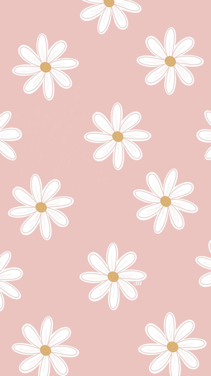 Daisy pink wallpaper