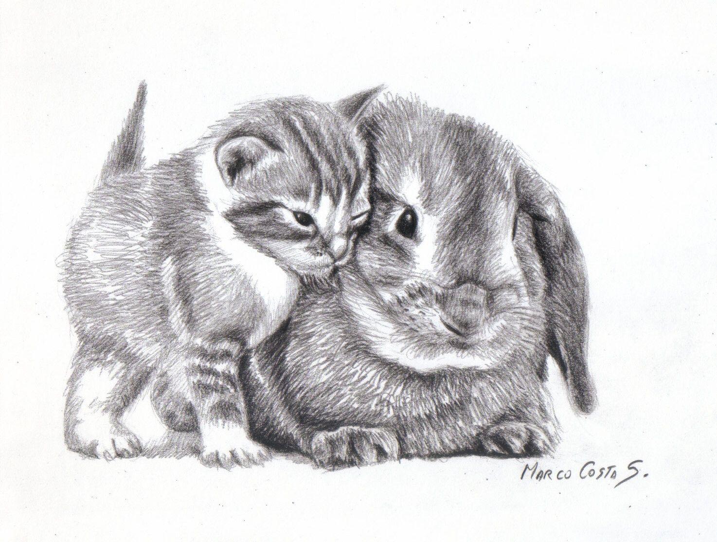 Gatos Hechos A Lapiz Imagui Kitten Drawing Pencil Drawings Of Animals Animal Drawings