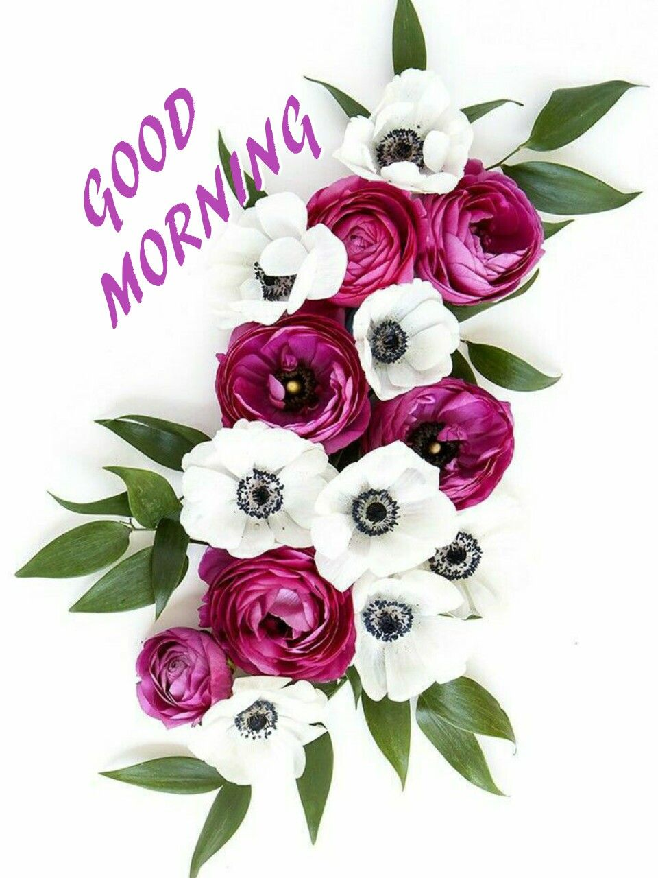 Good Morning Have A Nice Day Good Mrng Pinterest Good