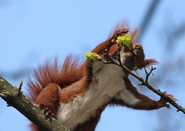 #squirrel #eichhörnchen
