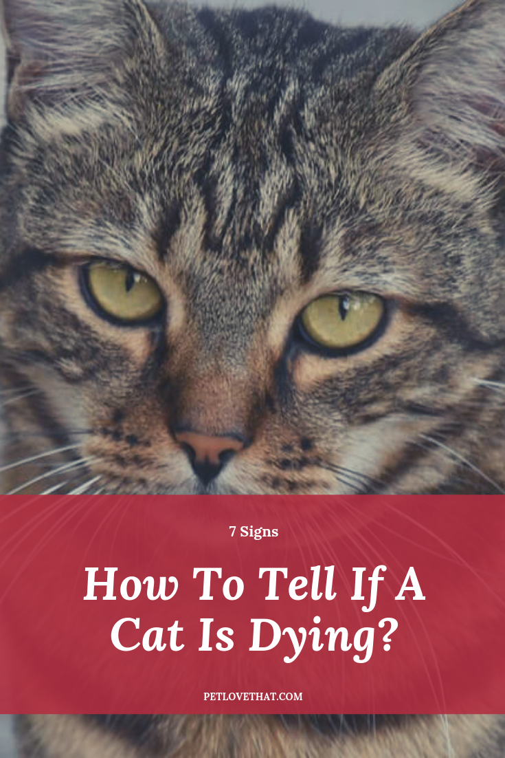 7 Signs How To Tell If A Cat Is Dying Cats, Cat health