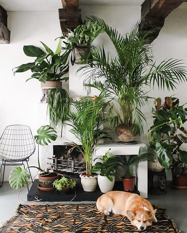 Do You Enjoy Making Your Home Greener Happier With Plants Show