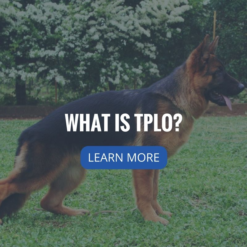 What Is Tplo Veterinary Services San Antonio Learning