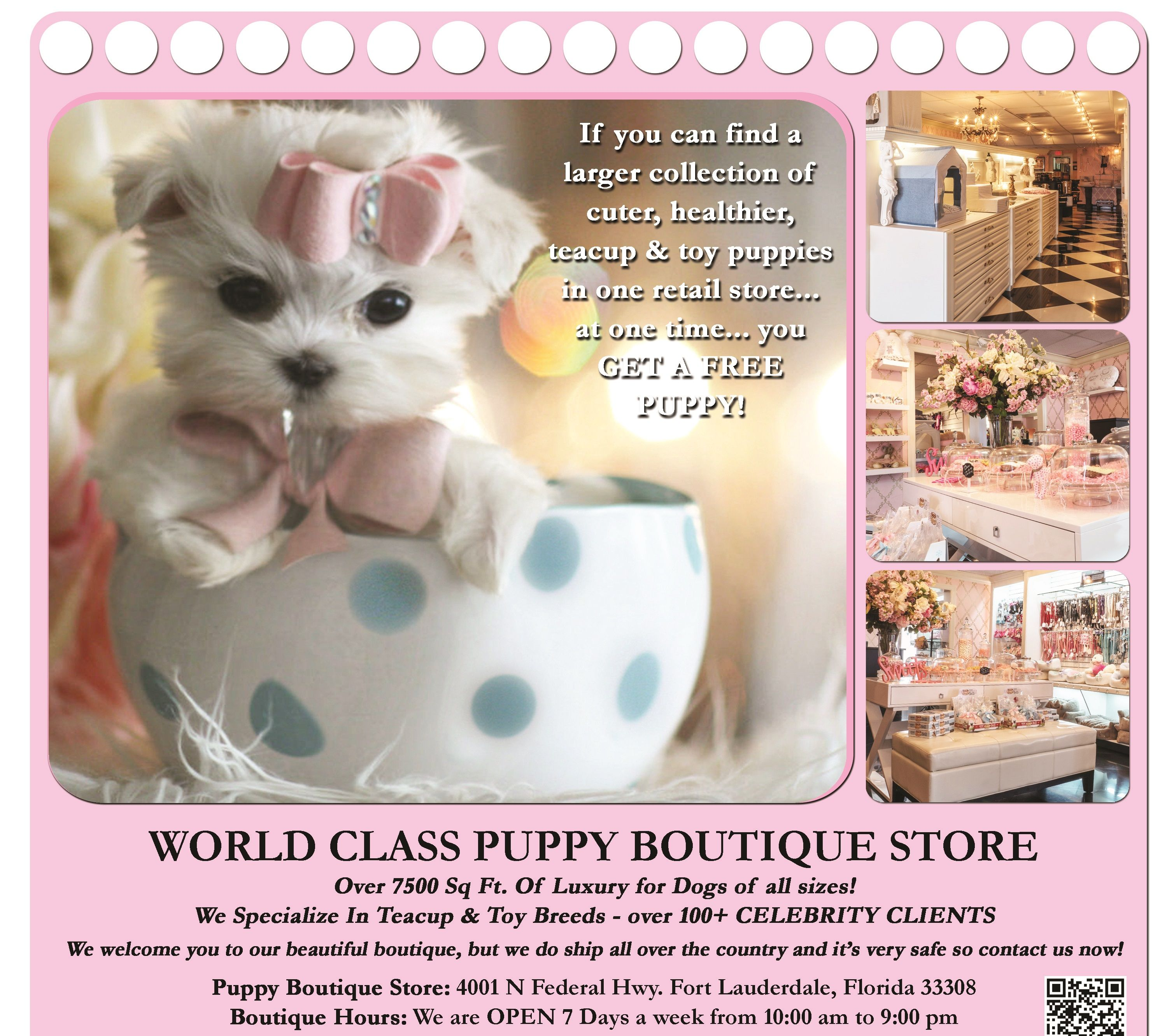 Teacup Puppies For Sale And Boutique And Teacup Yorkies Maltese Puppies For Sale Puppies For Sale Teacup Puppies For Sale