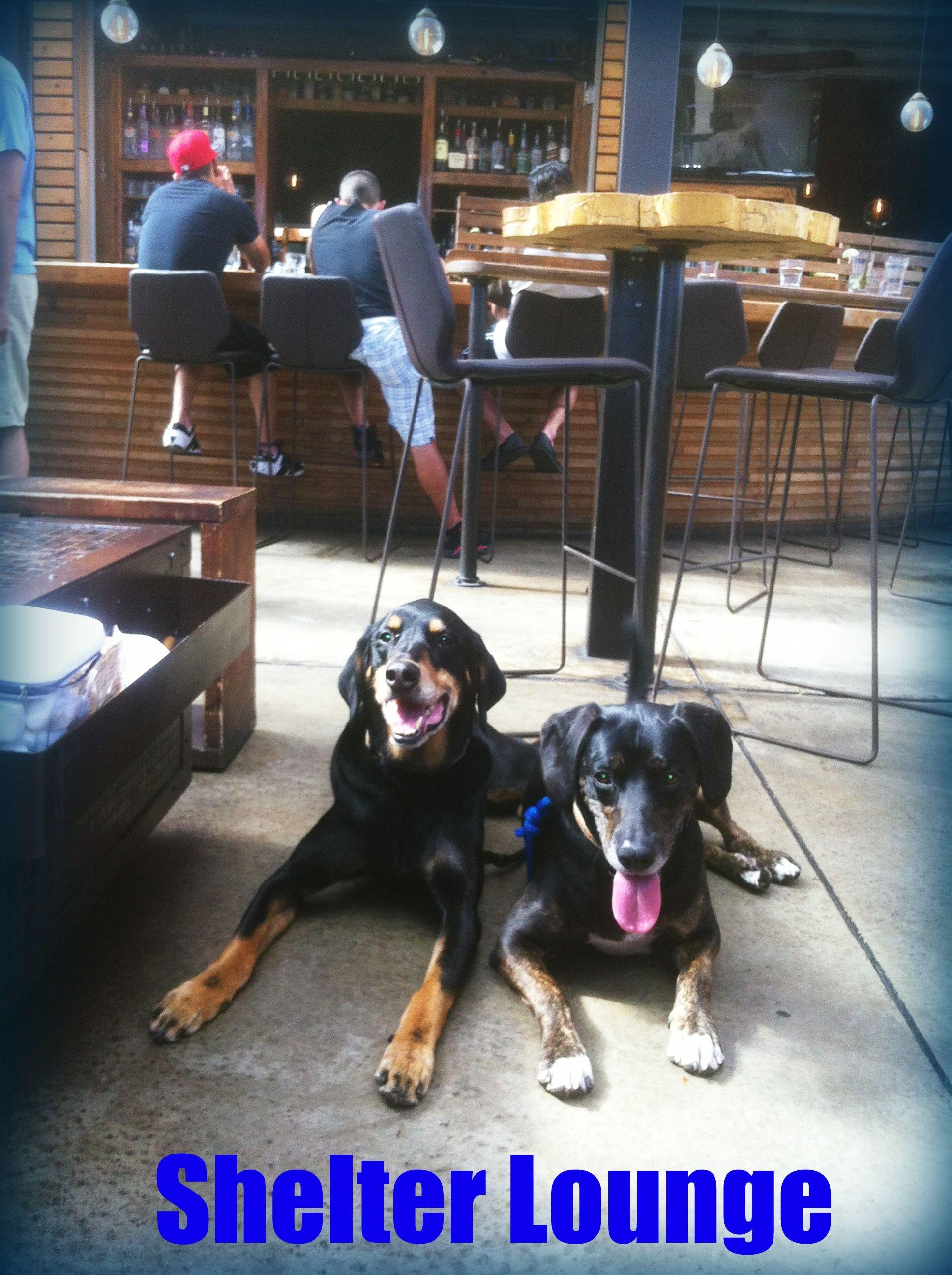 Shelter Lounge, dog-friendly bar