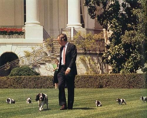 Famous Presidential Pooches Springer Spaniel Puppies Springer