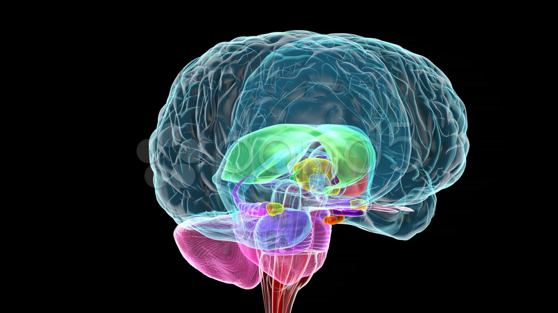 Brain Images Hd