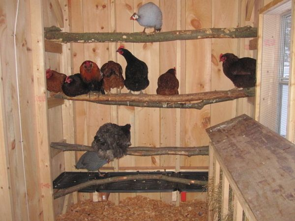 Roosting Bars For Chickens Roosting Bar Chicken Cages
