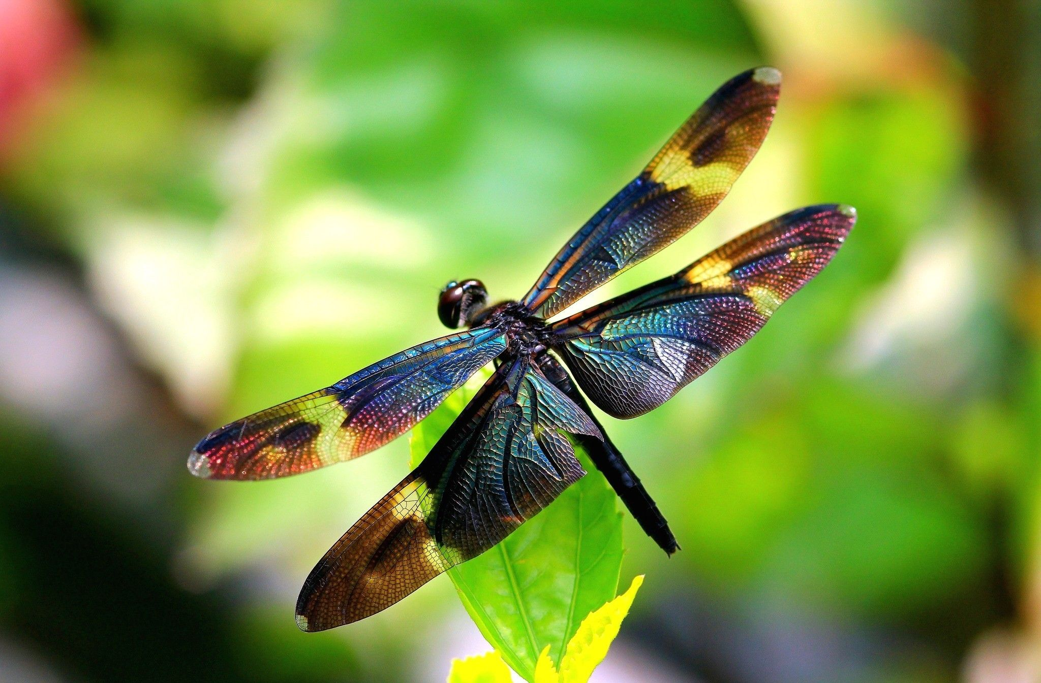 algoma residential community hospice - the dragonfly | georgeous