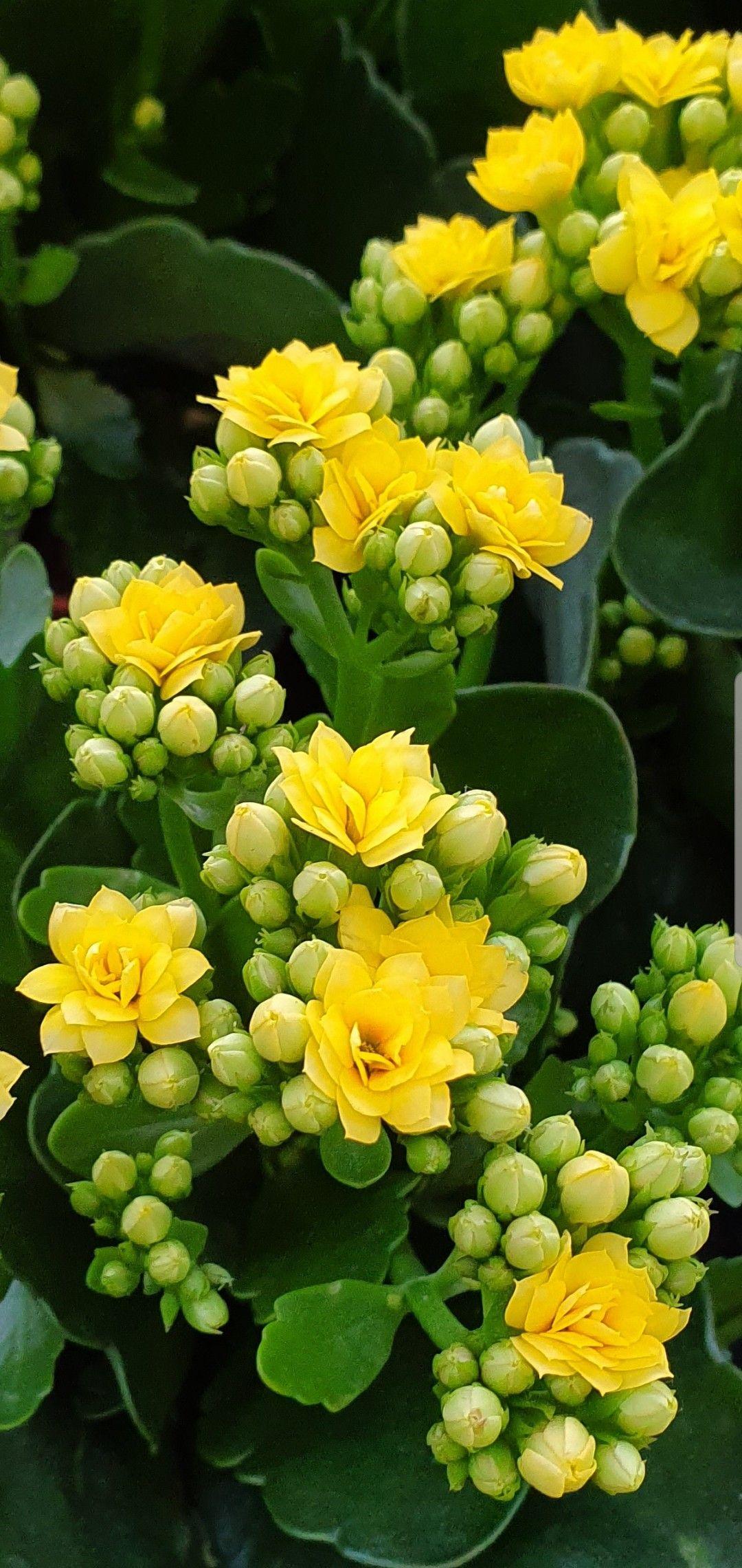 Trop Jolie Belles Fleurs Planter Des Fleurs Cadre Fleur