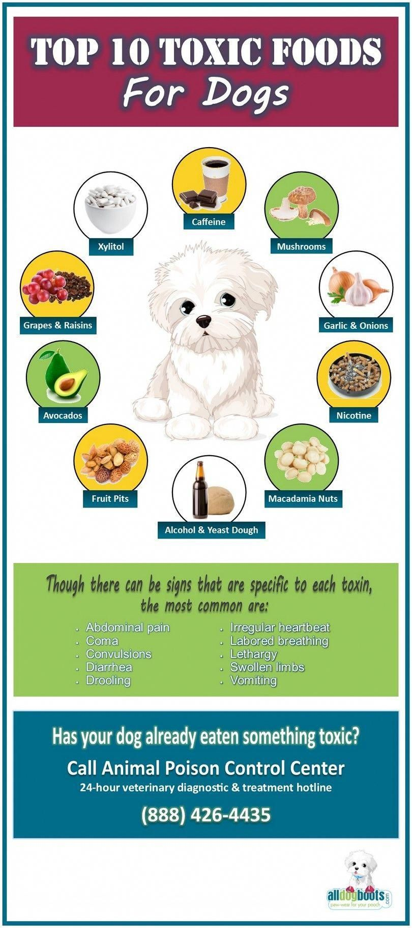 Toxic Foods Dogs Doginfographic Toxic Foods For Dogs Dog Food