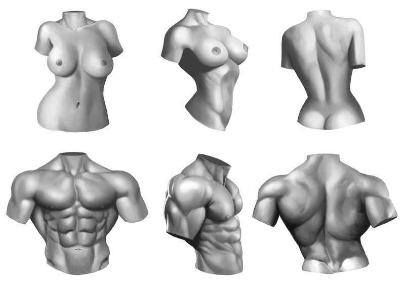 Male/Female anatomy torso study by Xelgot | Differences Between Male ...