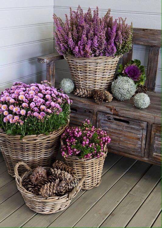 Blumen #outdoorflowers