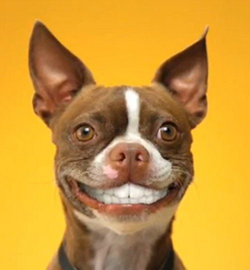 image animaux sourire