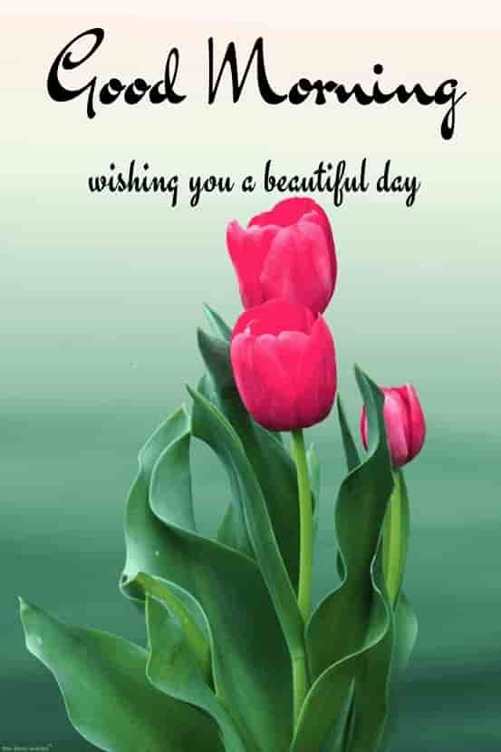 Good morning pics hd image with flowers for tuesday
