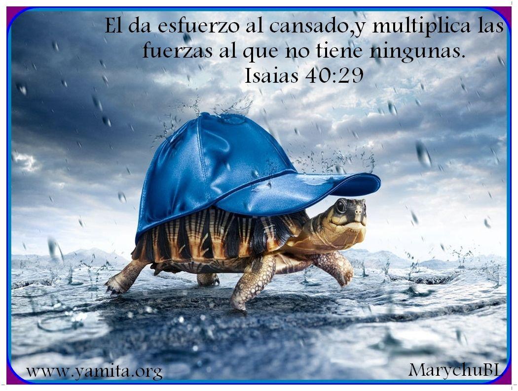 Versiculos De La Biblia De Animo: Imagenes Cristianas Con Textos Biblicos