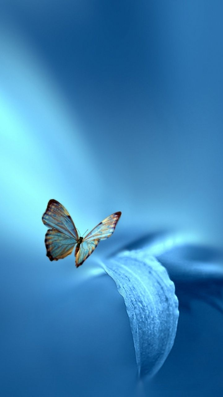 Download this Wallpaper iPhone 5 - Animal/Butterfly ...
