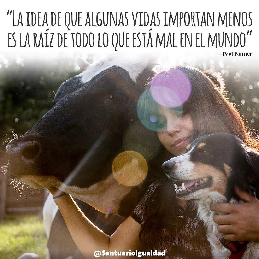Ayúdanos a llevar este mensaje a quien le pueda abrir el corazón.  -- #cow #cowlove #cowselfie #cowlover #santuarioigualdad #animals #animal #photooftheday #cute #pets #animales #cute #love #animallovers #nature #beautiful #pretty #happy #instadaily #amazing #friends  #mothernature #instachile #inspiration #rescue #inspirational #vegan #govegan