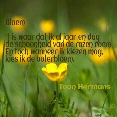 spreuken en gezegden toon hermans Toon Hermans   spreuken   Pinterest   Tonen, Gedichten en Spreuken spreuken en gezegden toon hermans