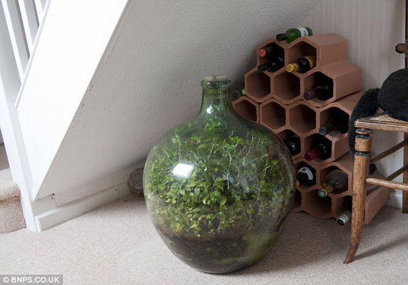 Sealed Bottle Garden Has its Own Ecosystem and Watered only Once Since 1972