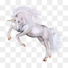 Transparent White Horse Art Cavalos