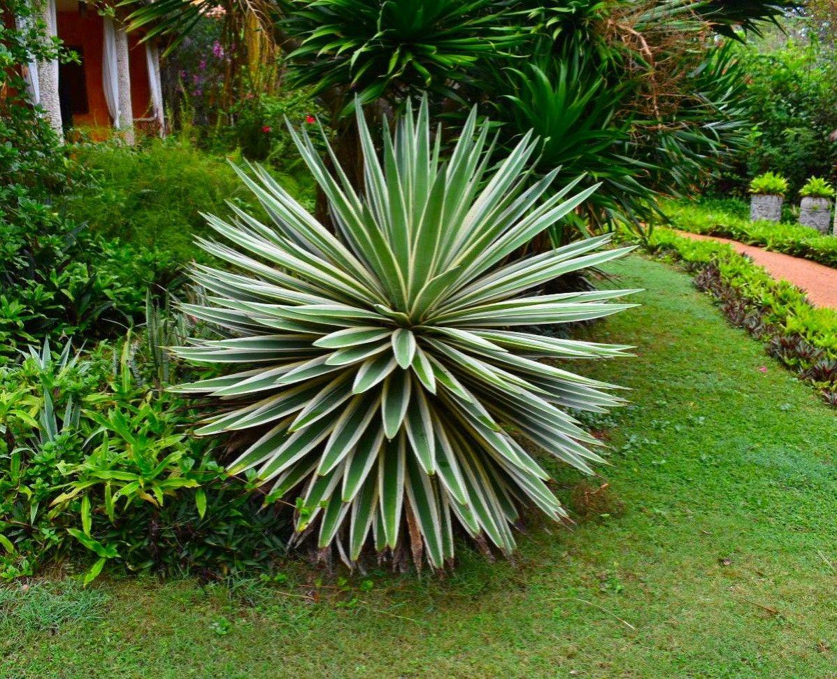 Frontyard Landscaping Ornamental Plants Plants Backyard Plants