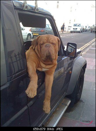 Is this dog cool or what?