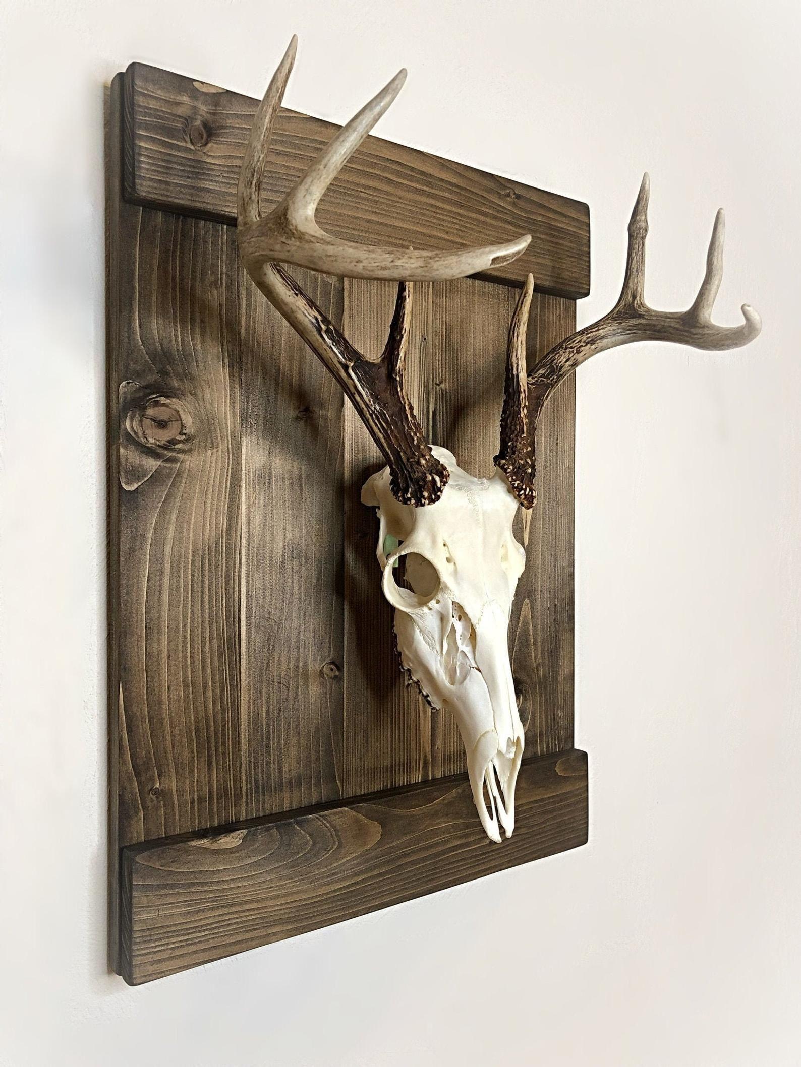 One piece Wood trophy-plaque Wall mounts Display antlers