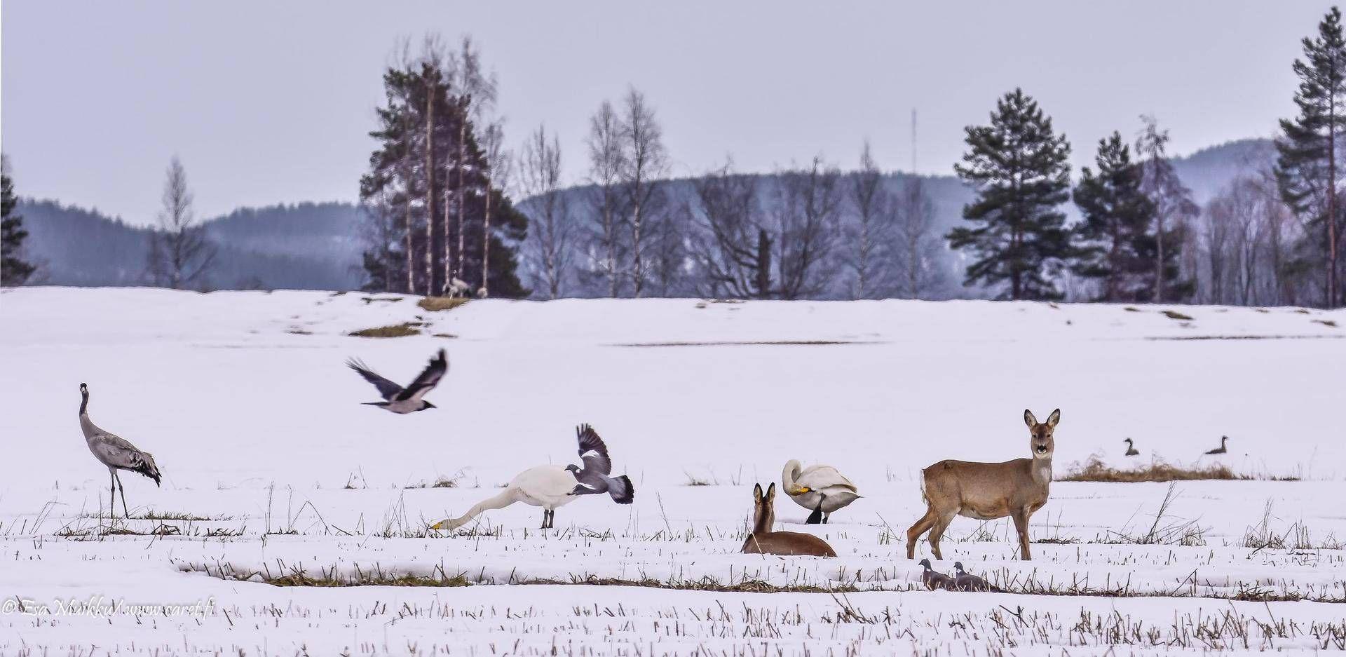 Esa Muikun huikeaa luontokuvaa ei uskota aidoksi – löydätkö kaikki kuusi eläinlajia? - Kotimaa - Ilta-Sanomat