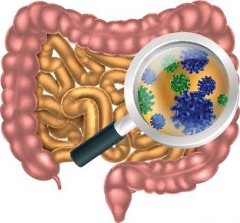 Gut bacteria mediate link between diet and colorectal cancer