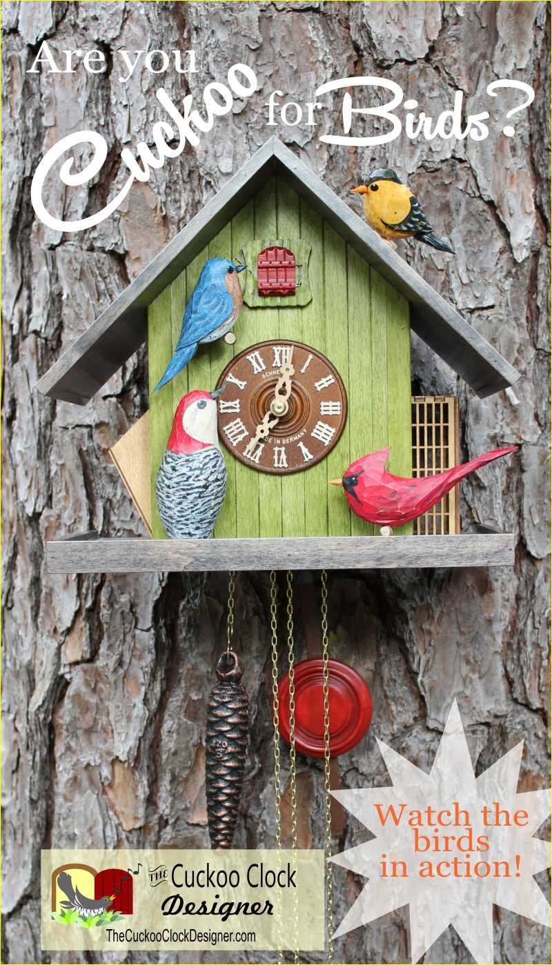 the backyard birds cuckoo clock the birds the block and the o u0027jays