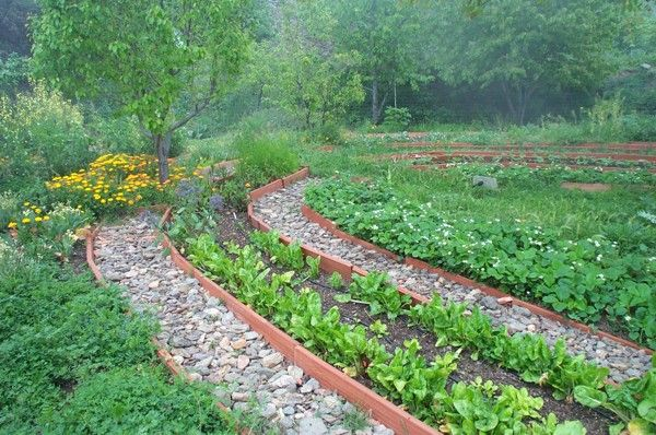 permaculture garden design sustainably managed veg gardens at semilla besada600 x 398 128 kb jpeg x
